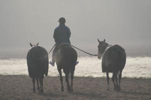 Chevaux dans la brume. Apremont (60)